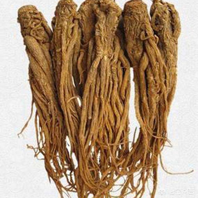农村种植的中药材当归有什么功效?