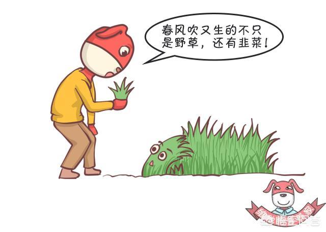 韭菜有什么功效和作用?