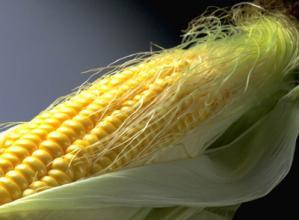 玉米须有何功效?