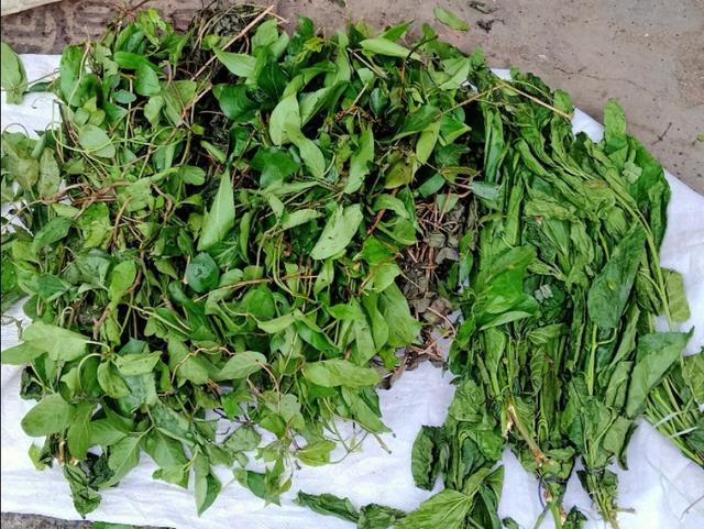 农村常见的能食用的野菜有哪些最常见的药材图片大全?请配图?