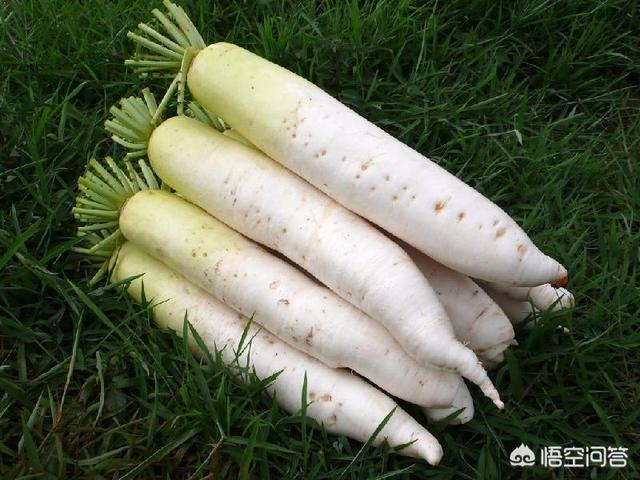 吃萝卜的好处有哪些?