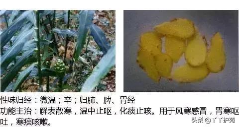 最全中草药图谱,附主治功效(建议收藏)(上)