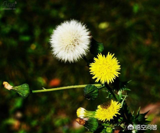 农村有哪些比较常见可以治病的草药最常见的药材图片大全?要实测有效的?