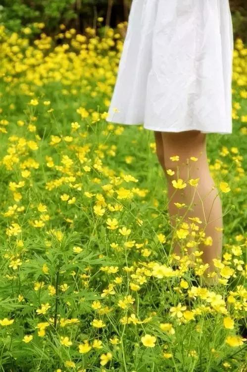 路边的常见野花野草,你还认识吗?