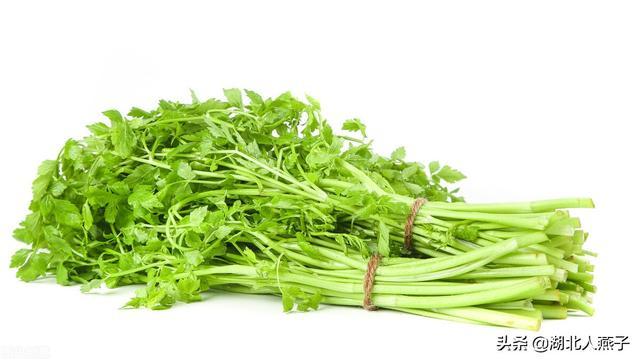 春天挖野菜最常见的药材图片大全,送你51种野菜大图片,你想要的野菜都在这里,来看看