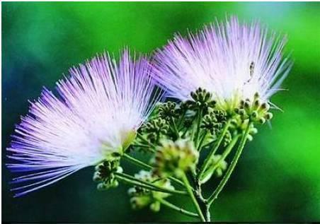 家里最常见的这些花,关键时刻都能当药材用!