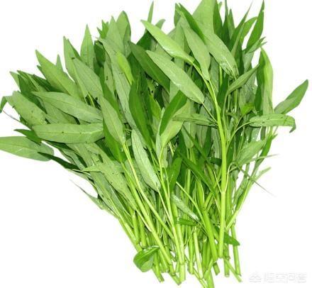 空心菜吃了对身体有哪些坏处青青菜的副作用?