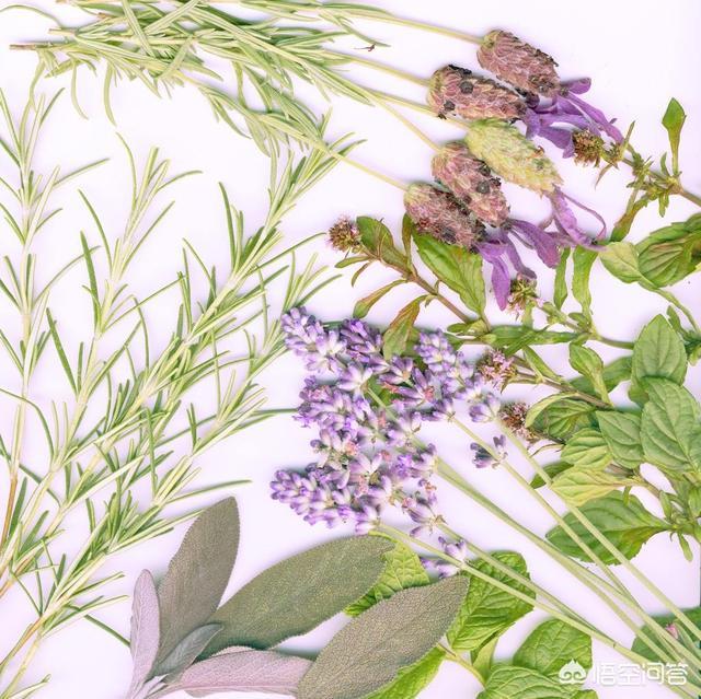 哪些花草可以入药?