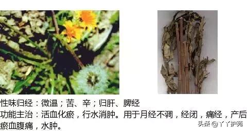 最全中草药图谱中药草图片大全,附主治功效(建议收藏)(下)