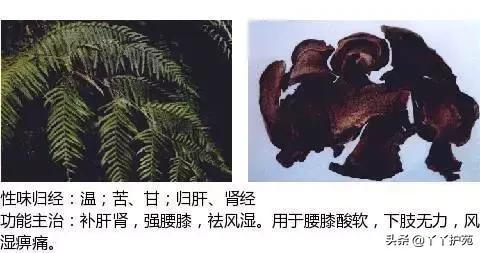 最全中草药图谱中药草图片大全,附主治功效(建议收藏)(中)