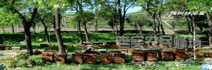 ★★★什么样的蜂蜜有什么样的作用与功效?常喝蜂蜜的人一定要知道