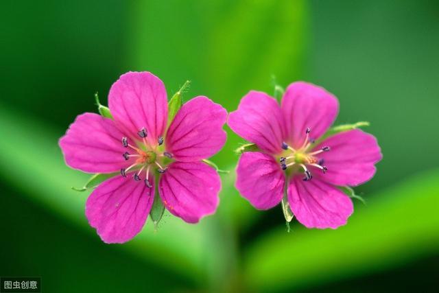 超漂亮的6种野花,农村很常见,认识3种以上厉害了
