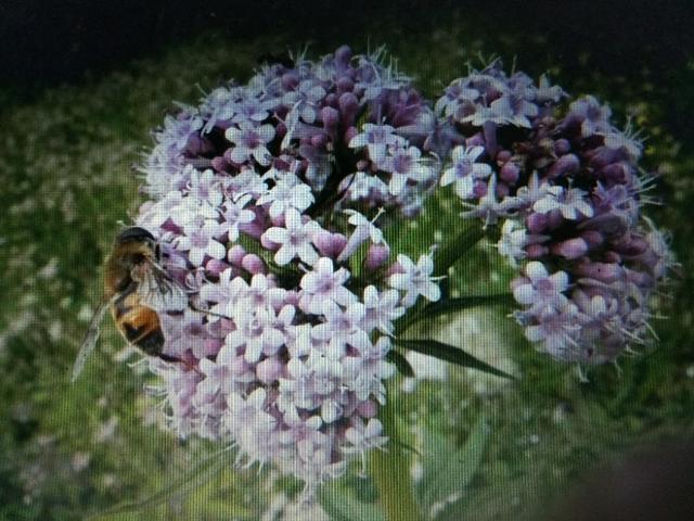 蜂蜜入药有何功中药蜂蜜的作用与功效与作用是什么?