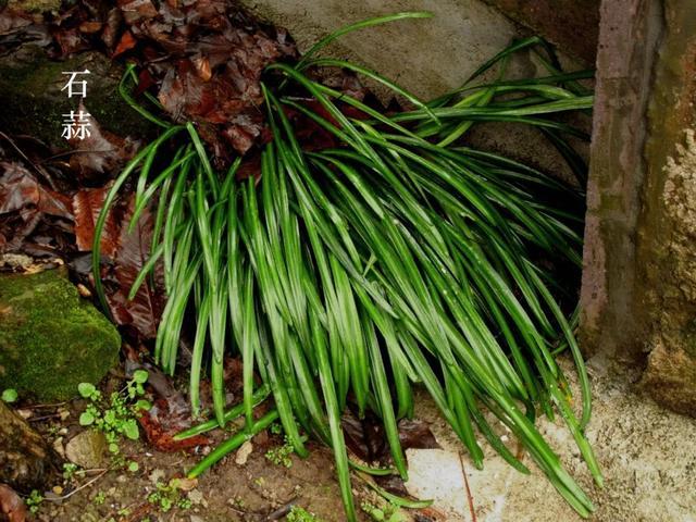 这21种草木颜值高药效好中药草图片大全,但却都是毒物,接触和使用要当心
