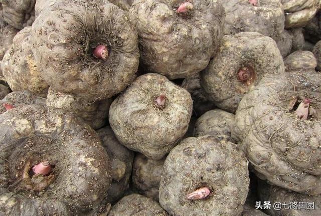 农村遍地都是食物中药草图片大全,农民经常吃的42种野菜,你吃过几种?
