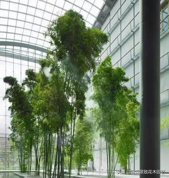 26种·竹子大全-超级丰富的竹子种类,收藏学习