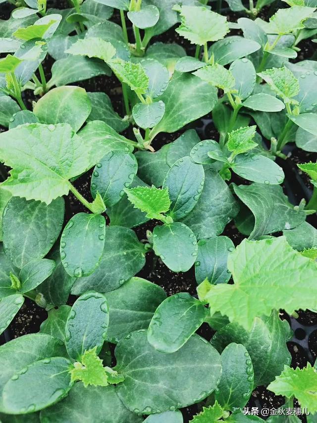 菜园里的青菜被虫咬了很多孔,是什么害虫?该怎么防治?