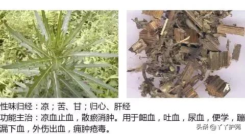 最全中草药图谱,附主治功效(建议收藏)(下)