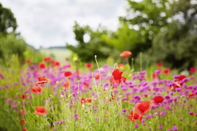 这些农村的野花野草,你还记得它们的名字吗?