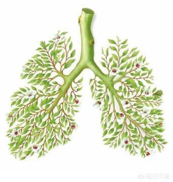 秋天怎么养肺气?