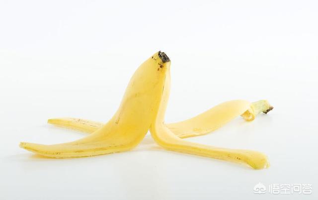 香蕉皮有什么用处火炭母中药图片?