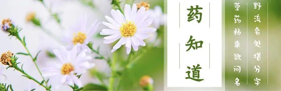 药知道 | 美容养颜、清肺润嗓——杨桃