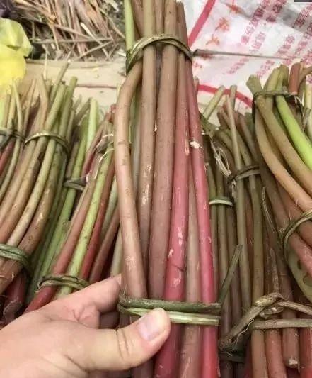 农村人把这种草随便丢月经草的功效与作用,其实比肉更好啊,想想就让人流口水