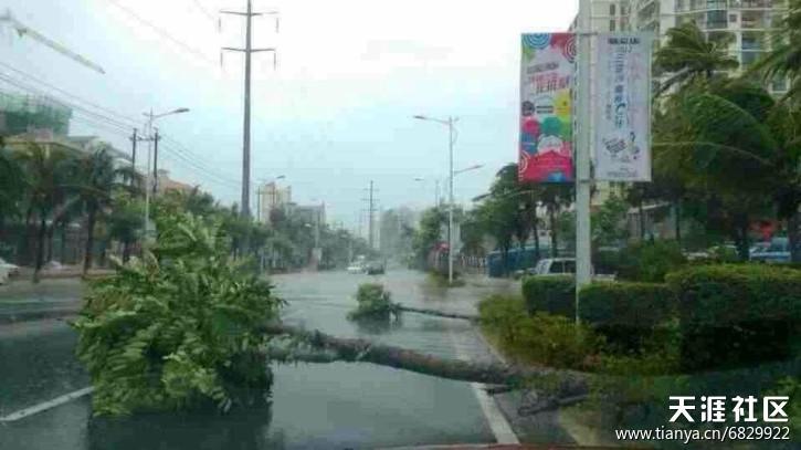 """历史最强台风""""海燕""""给海南带来重大损失!(损失情况汇报贴)"""