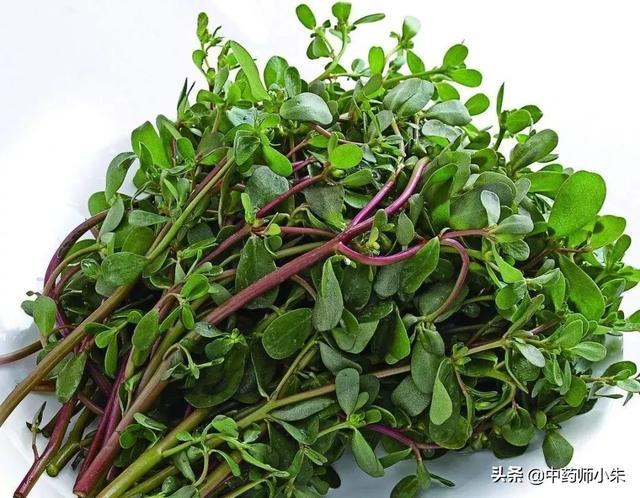 农村野菜马齿苋到底是什么东西月经草的功效与作用?它到底都有哪些不一样的功效?