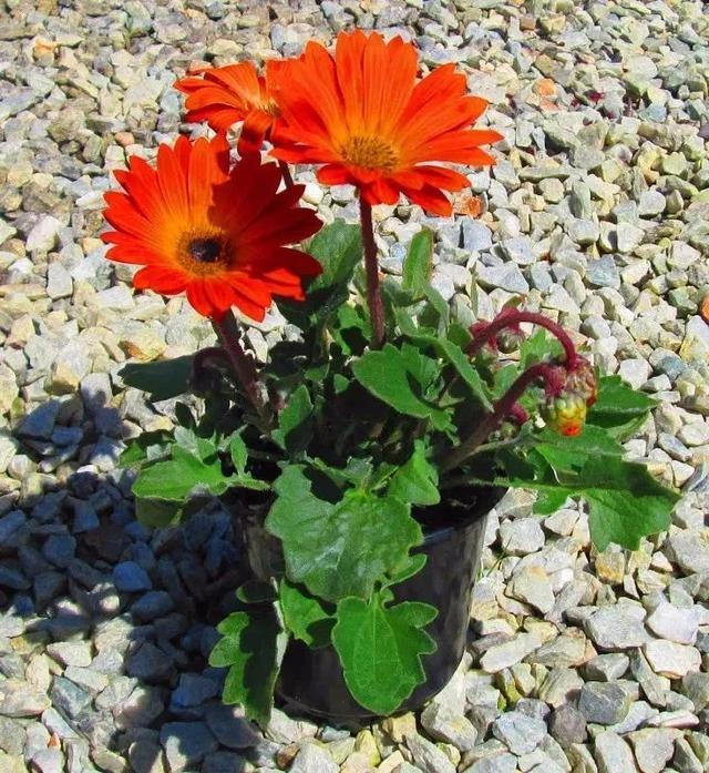 给家里多增添些热带风情红花图片,这12种红红火火的热带红花不可少