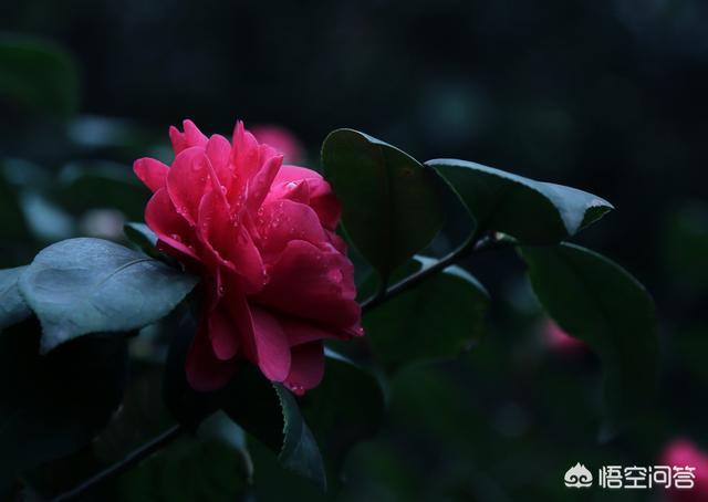 为什么数码单反拍红花高光很容易溢出红花图片,有什么好办法?