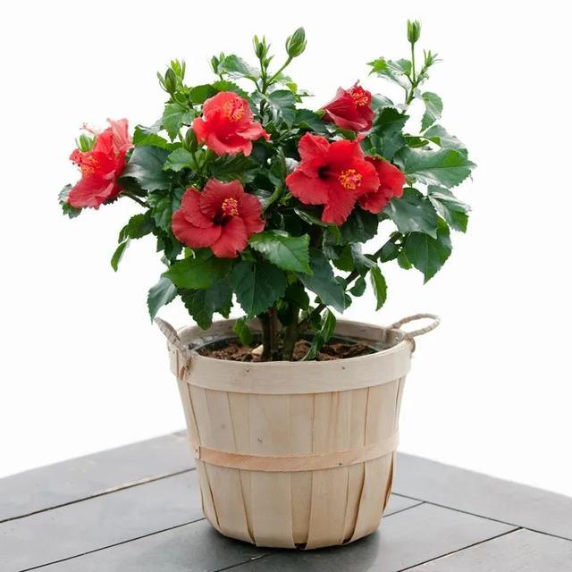 给家里多增添些热带风情,这12种红红火火的热带红花不可少