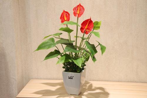 过年图吉利红花图片,养这些花保准错不了!花开红花喜庆过年!