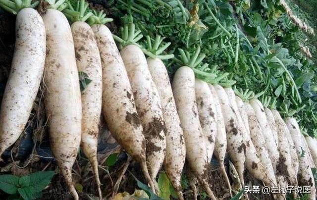 白萝卜有哪些功效和作用呢?