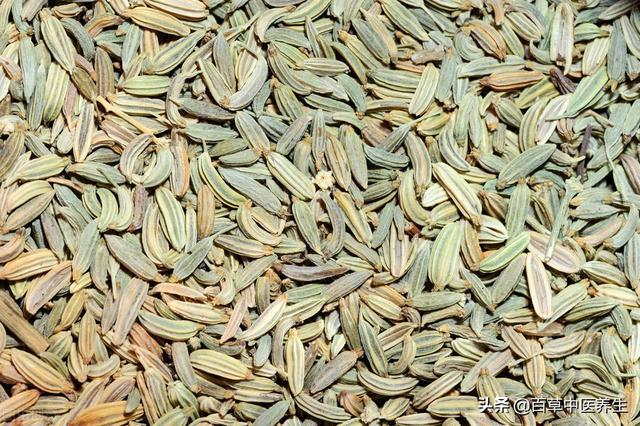 小茴香——补肾阳,理气,散寒