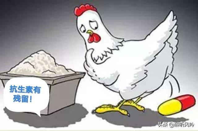 用板蓝根配制药剂治疗蛋鸡呼吸道疾病,有哪些官方药名?