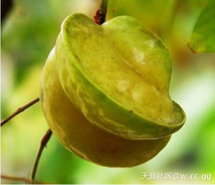 海南杨桃的吃法,热带水果杨桃的作用功效及营养价值