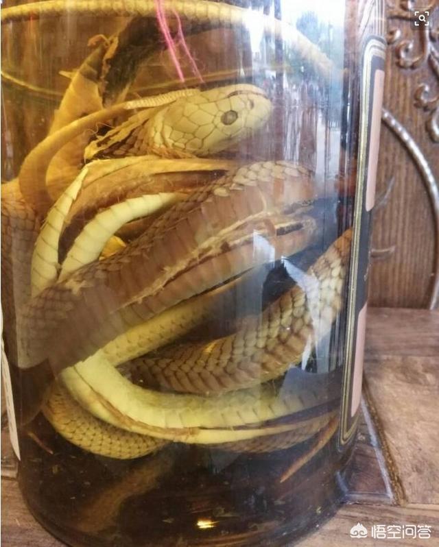 毒蛇泡酒有什么疗效?