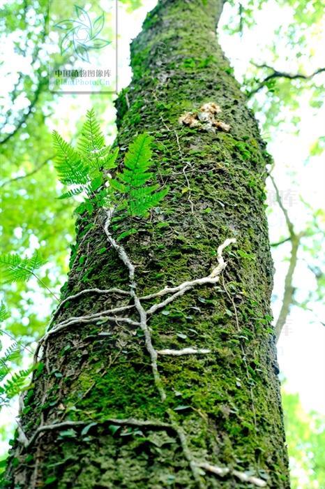 白毛蛇,见过吗?祛风除湿。用于风湿性关节炎,腰腿痛,腰肌劳损