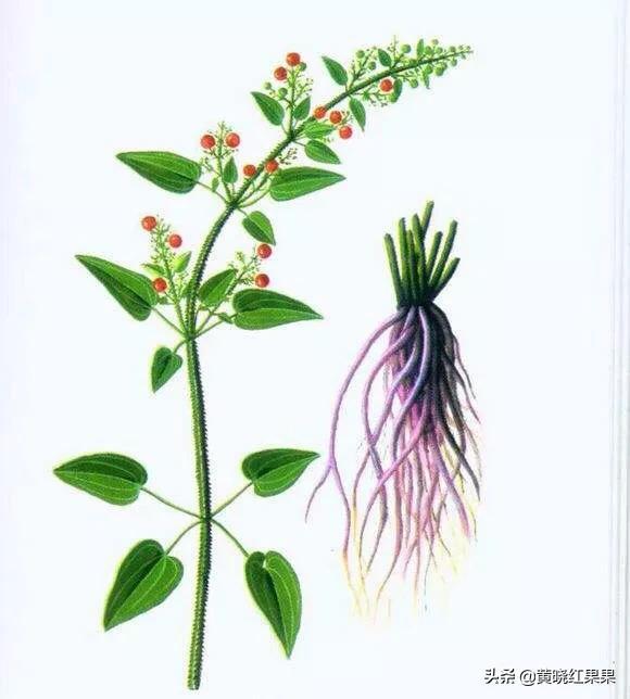 有一种叫茜草的中药材黄什么花图片是药材,可以进行人工种植吗?