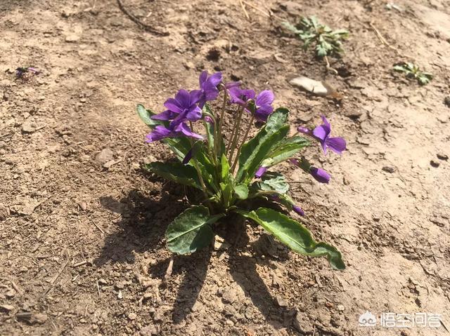 在农村你见到最漂亮的野花是什么花?