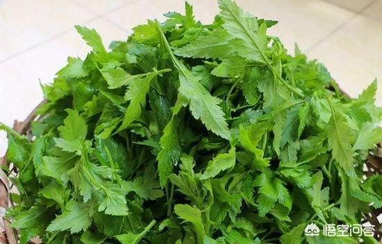 菊花脑的功效与作用及禁忌,如何正确健康的食用菊花脑?