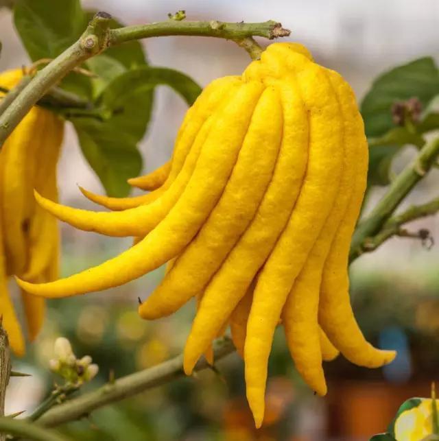 这是什么水果?长得好奇怪?