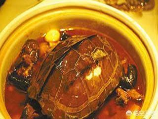 乌龟汤的功效与作用是什么?