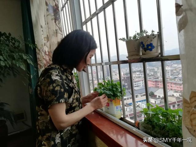 你家阳台客厅养了哪些花,长的怎么样?