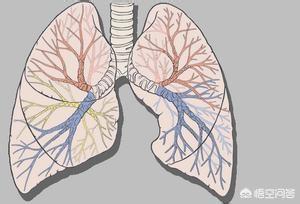 我是支气管扩张,现以呼吸功能衰竭咳血怎么治好?