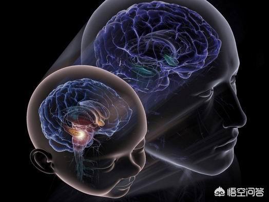 有哪些营养神经的中药?