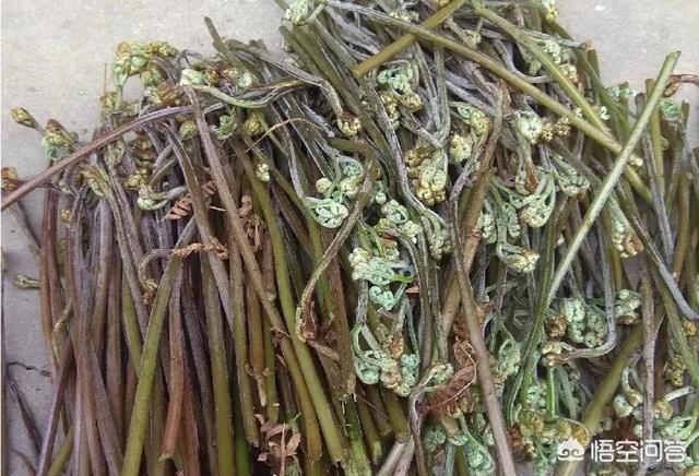 清明节到五一前后,在农村,有哪些野菜可以食用?野菜怎么做比较好吃?