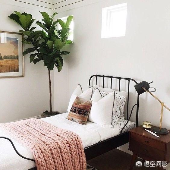 卧室放什么植物有助睡眠?
