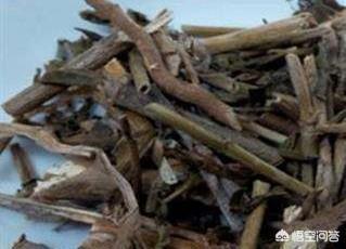 """农村常见的名为""""上树蜈蚣""""的植物在哪里寻找蜈蚣藤的功效?这个植物有什么作用?"""